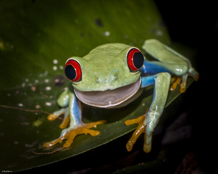 Shocked Frog