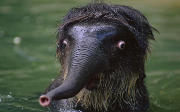 Shocked Elephant