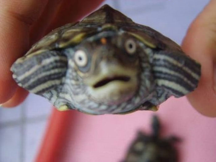 Shocked Turtle
