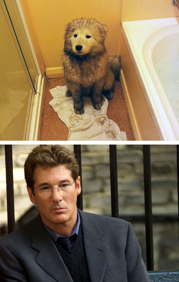 This Dog And Richard Gere