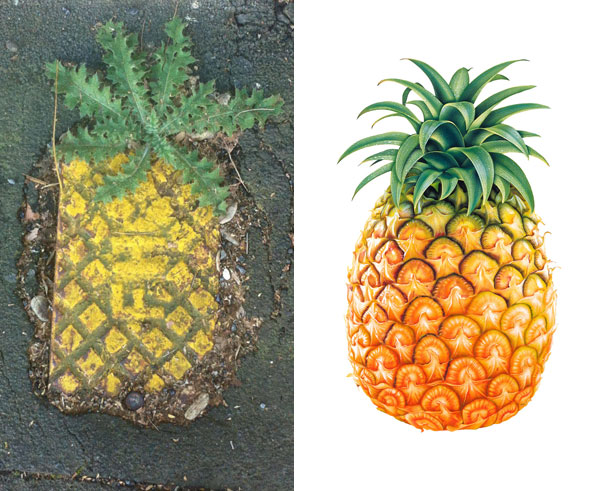 Street Grate Or Majestic Urban Pineapple?
