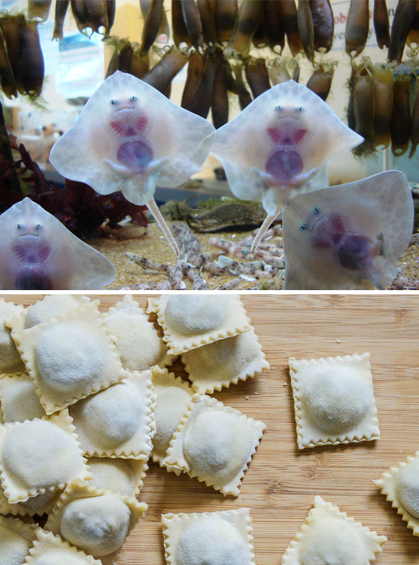 Baby Stingrays Look Like Raviolis Stuffed With Tiny Souls