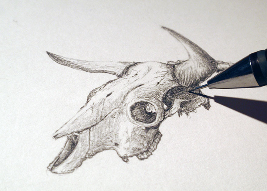 skeletons-animals-combined-into-creatures-martin-van-lib-5