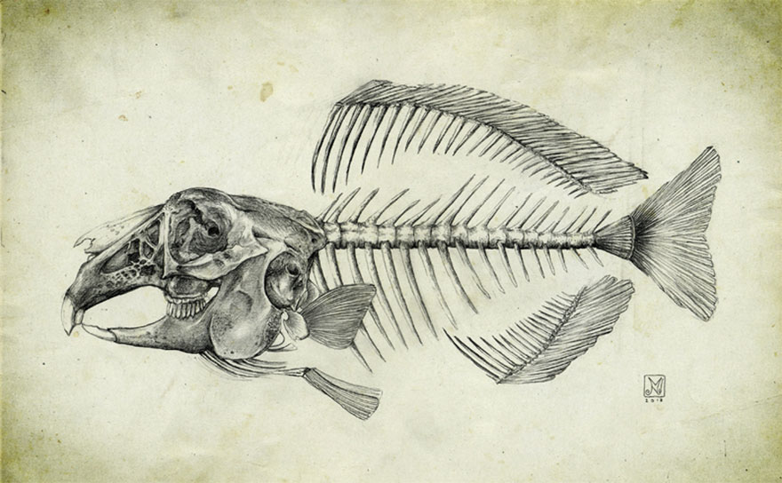 skeletons-animals-combined-into-creatures-martin-van-lib-7