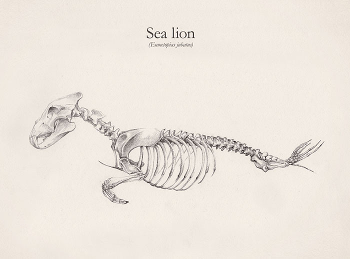 Skeletons Of Animals Created By Combining Different Creatures
