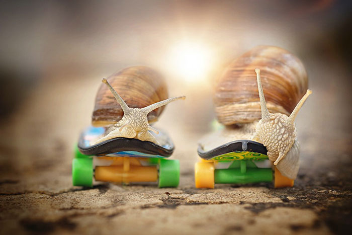 Let Me Show You How Beautiful And Courageous Snails Can Be