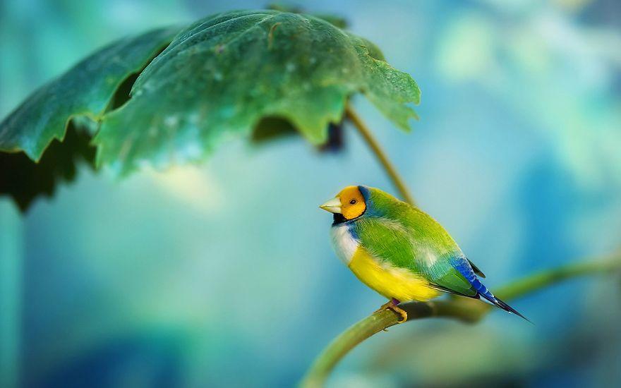 Sparrow Leaf Sun Blocker