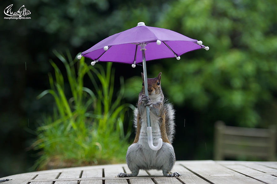 squirrel-umbrella-rain-squirrelisimo-max-ellis-5