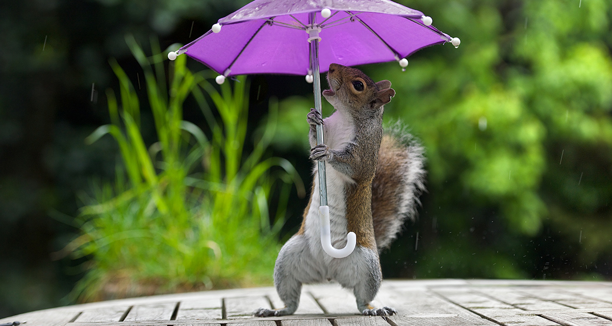 Photographer Gives Squirrel A Tiny Umbrella To Protect Itself From Rain
