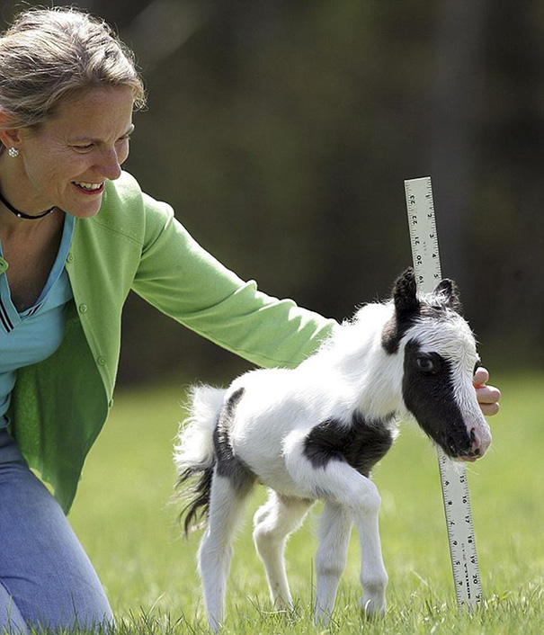 Baby Enstein - A Tiny Miniature Horse