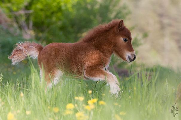 Mini Horse Mimi
