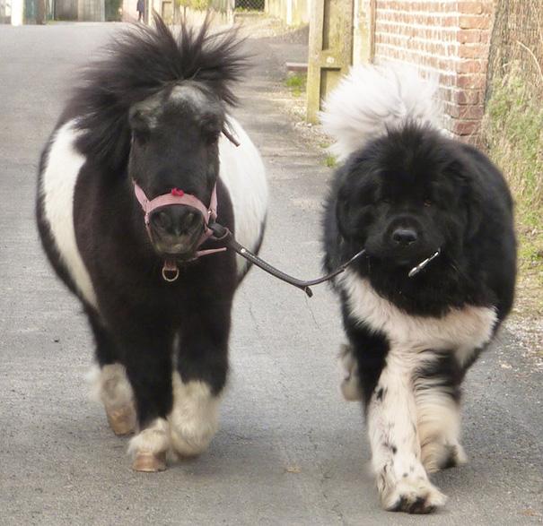 Tiny Horse Or Giant Dog?