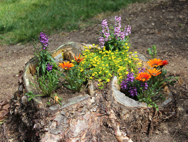 how to turn old tree stumps into unique flower planters wow amazing. Black Bedroom Furniture Sets. Home Design Ideas