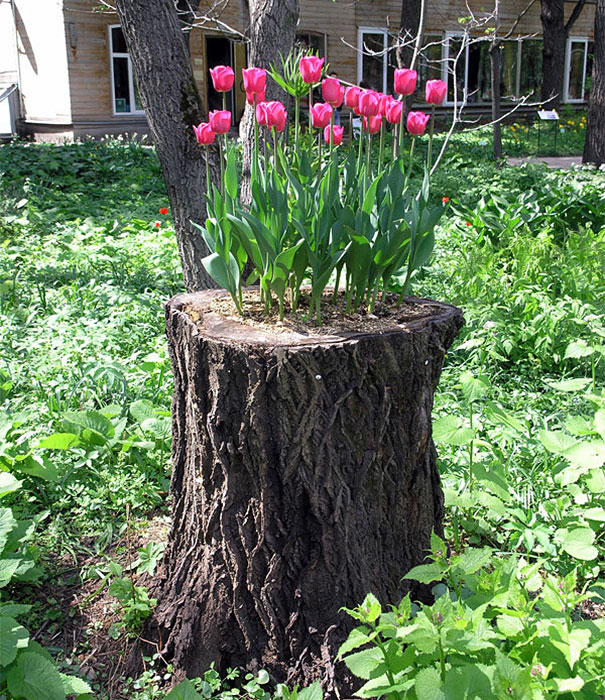 12 old tree stumps turned into beautiful flower planters for Tree trunk slice ideas
