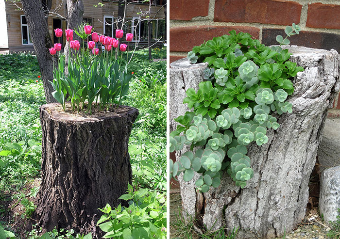 30 Old Tree Stumps Turned Into Beautiful Flower Planters