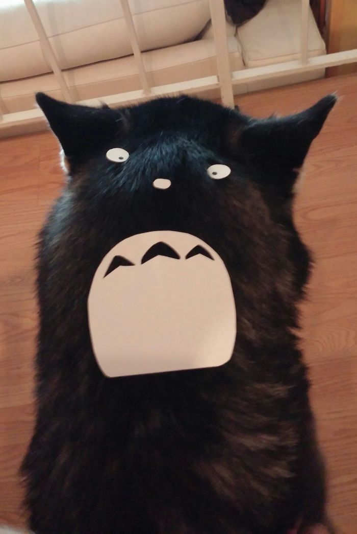Yoba: The Totoro Husky