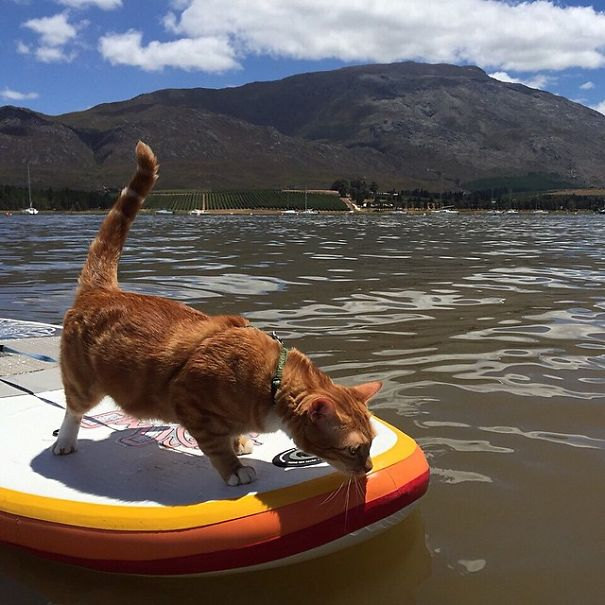 The Adventures Of Butternut The Cat