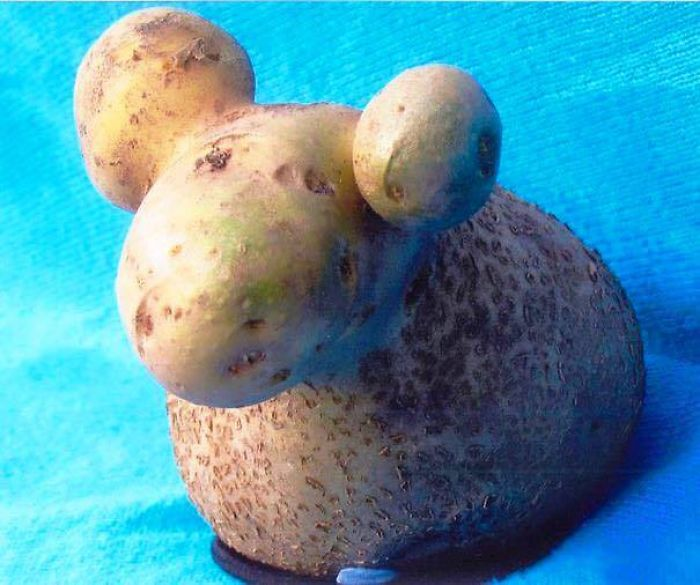 Unbelievable Fruits And Vegetables Shape That Will Amaze You