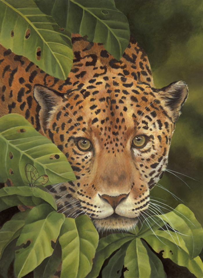 Celebrated Children's Book Illustrator And Rainforest Advocate