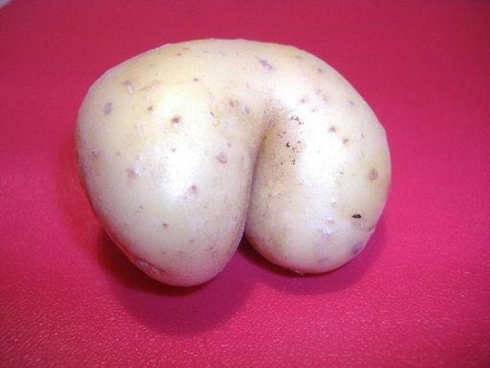 Amusing Potato – Shaped Like A Bottom.