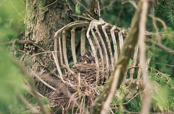 Grim Nest