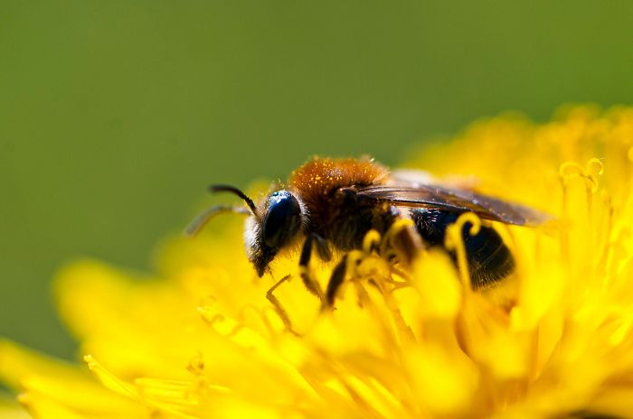 Beautiful Solitary Bees Film Reveals Their Lives Like Never Before