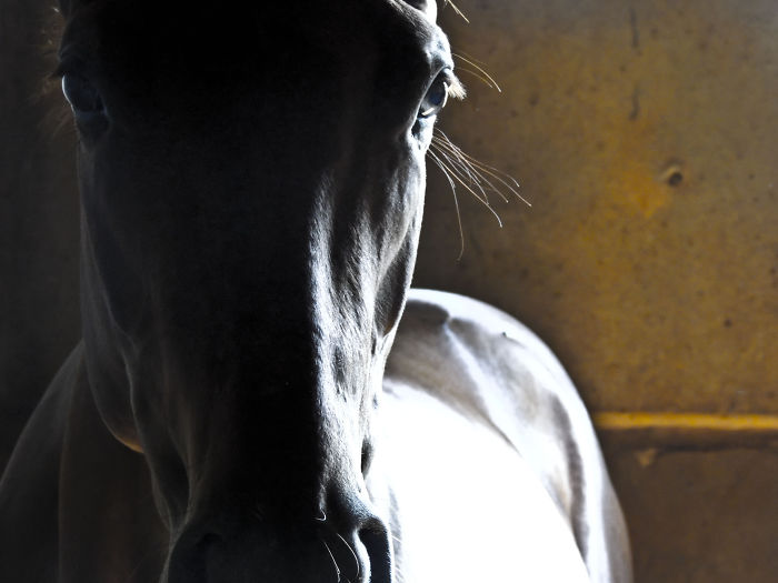 Thoroughbred, Quarter Horse….. More Than A Sport For Men.