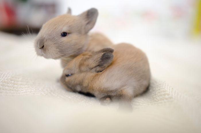 Rabbitats Baby Bunanza!