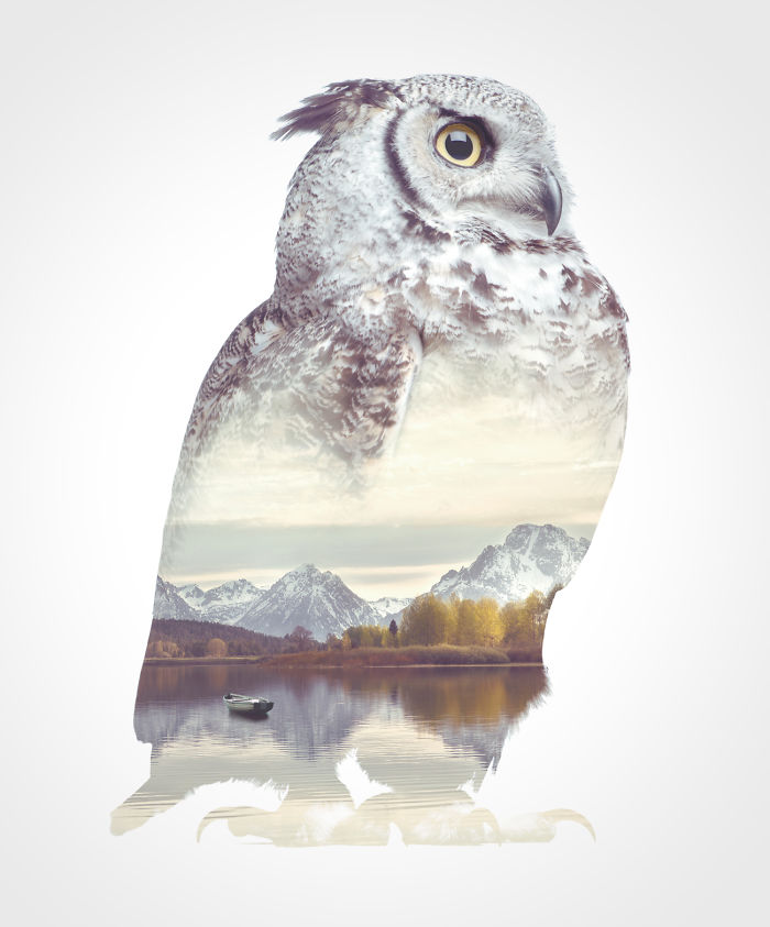 Faunascapes Owl