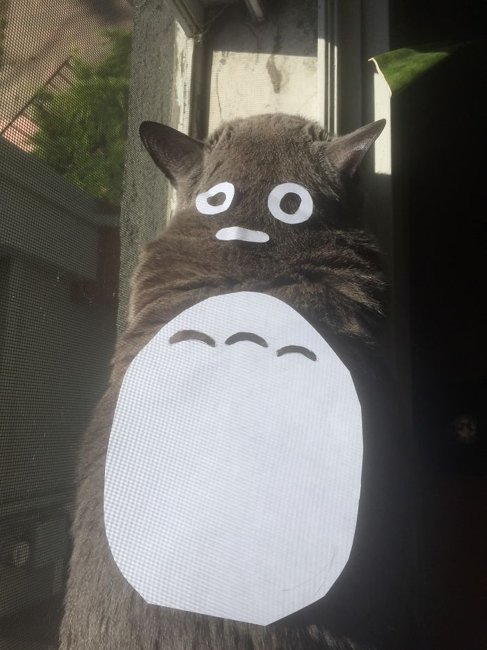 Fred As Totoro
