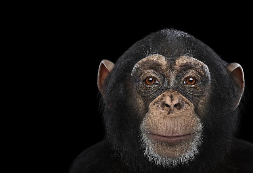 Портреты животных глаза в глаза