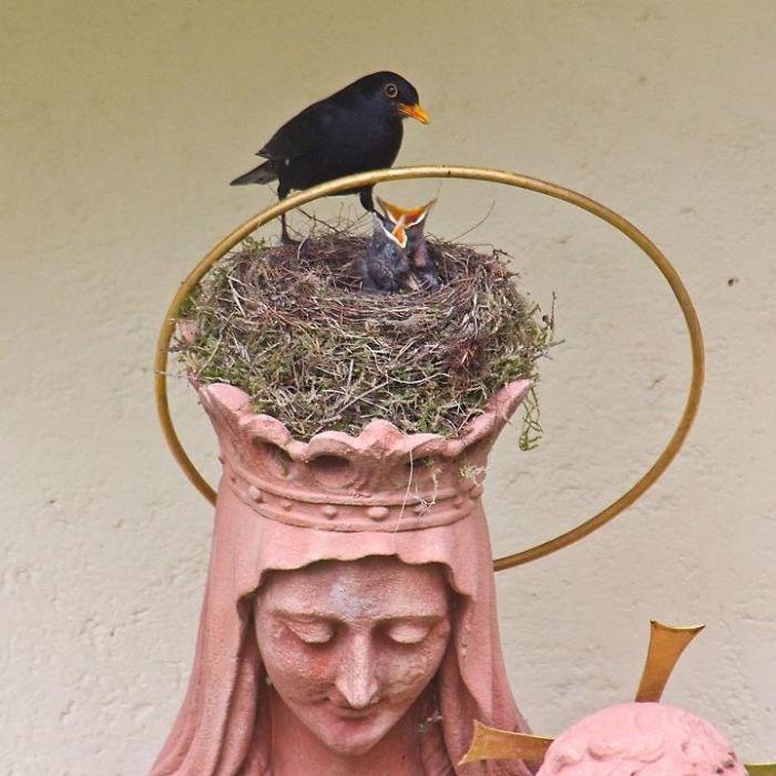Useful Madonna Statue Giving Blackbirds A Home