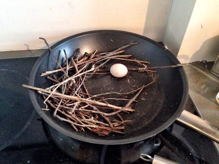 Ironic Pigeon Lays Egg In Frying Pan