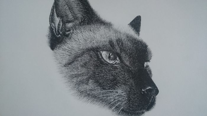 Realistic Microfiber Drawings Of My Cat