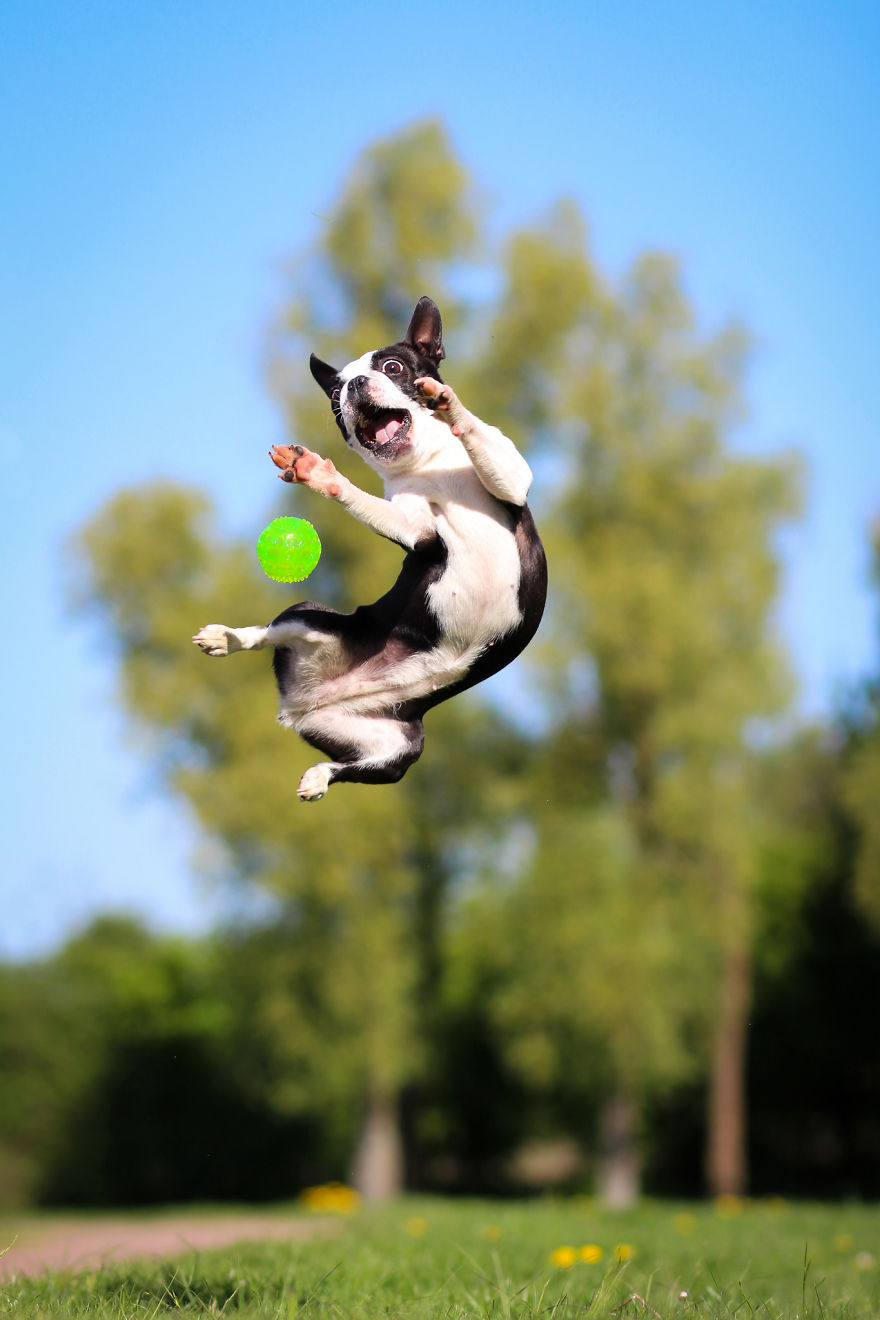 I Capture My Dog Showing Her Acrobatic Moves