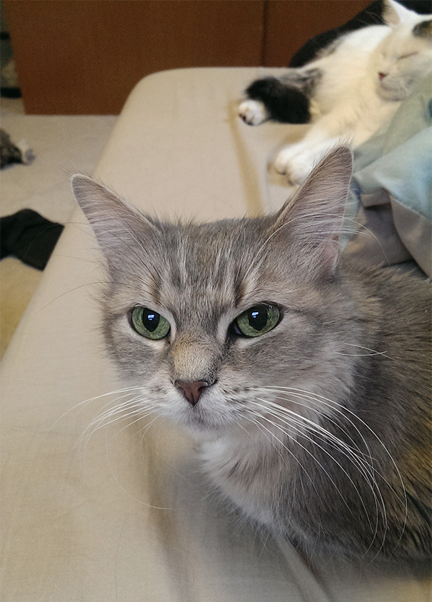 I Adopted This Beautiful 13 Year Old Cat. Her Name Is Q-tip For Now But We Are Trying To Think Of A New Name