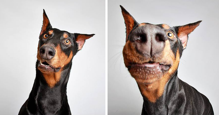 Cute Shelter Dog Photobooth Pics Help Them Find Forever