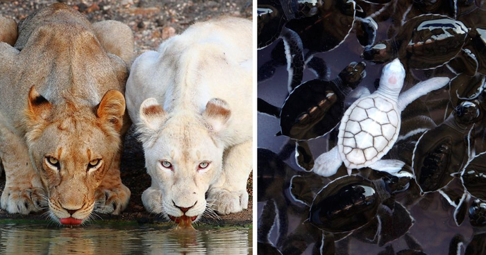 48 Albino Animals That Don't Need Color To Look Cool