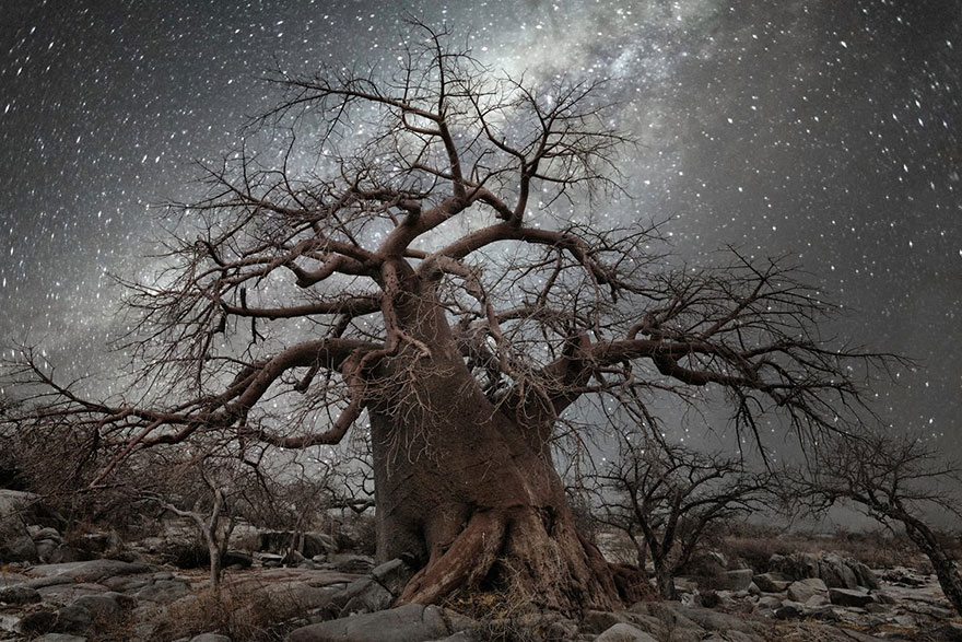 ancient-oldest-trees-starlight-photography-beth-moon-3
