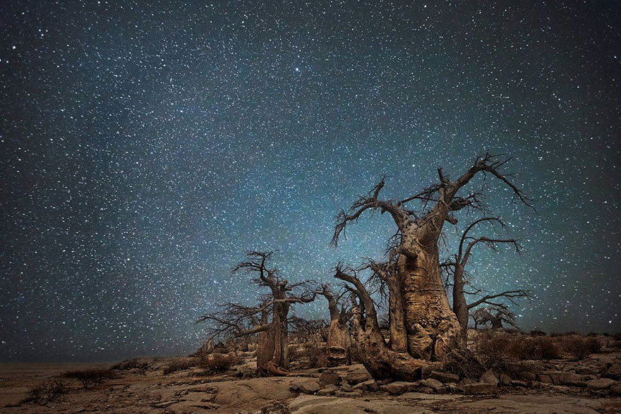 ancient-oldest-trees-starlight-photography-beth-moon-4
