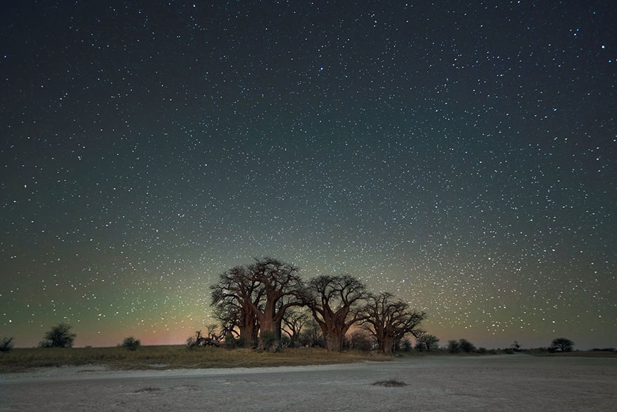 ancient-oldest-trees-starlight-photography-beth-moon-8