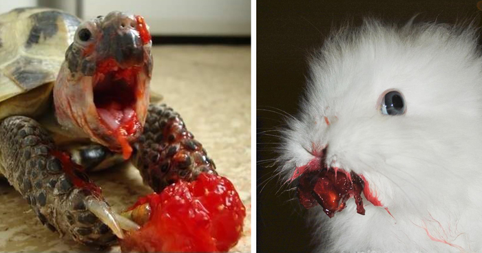 Can Dogs Eat Strawberries And Cherries
