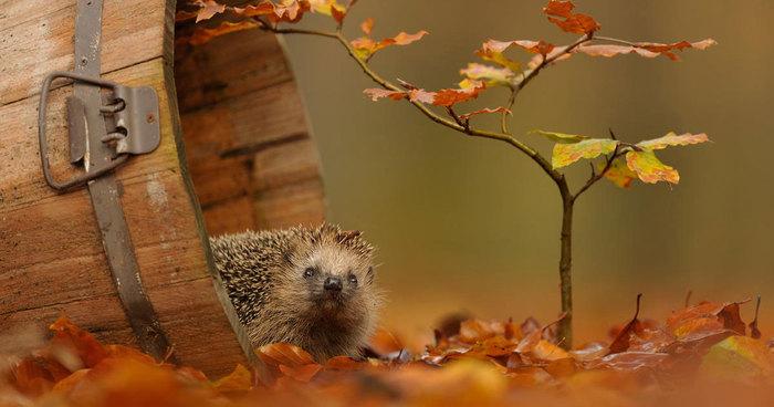 128 Animals Enjoying The Magic Of Autumn | Bored Panda