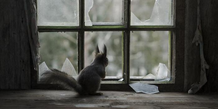 050d778e51ee 18 Beautiful Photos Of Animals Looking Through Windows