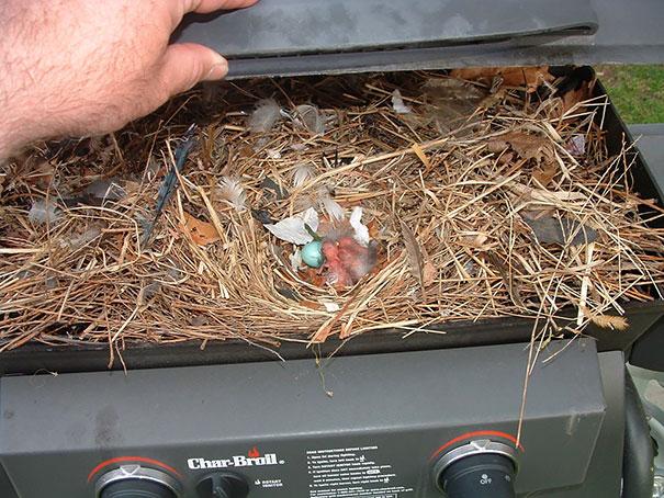 Bird Nest In Gas Grill
