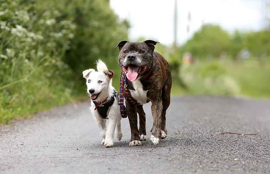 τυφλός Σκύλος