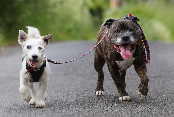 This Blind Dog Has His Own Seeing-Eye Guide And They're Looking For A Home