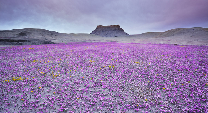 When Conditions Are Right These Utah Deserts Explode With Colourful