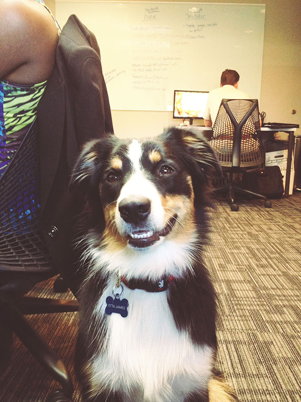A Visit from the Office Dog