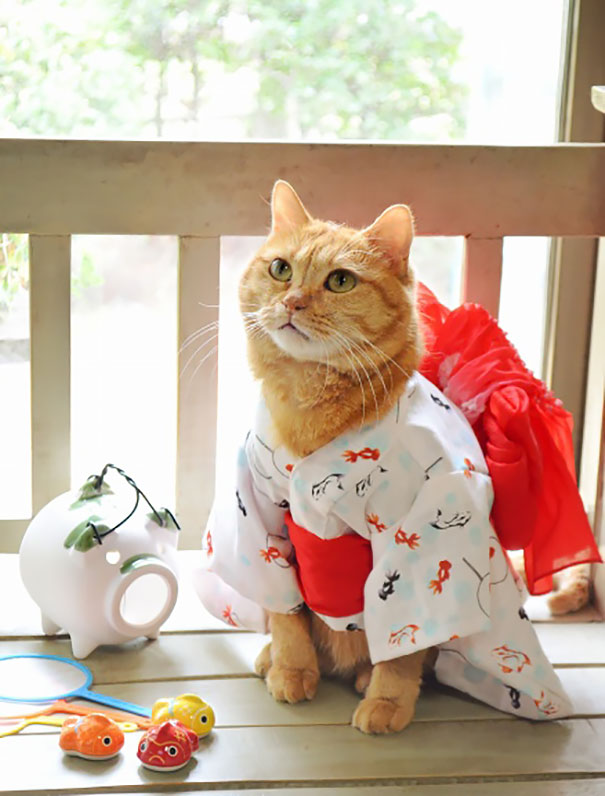 Kimono Cat & Cats In Kimonos Are A Thing In Japan | Bored Panda